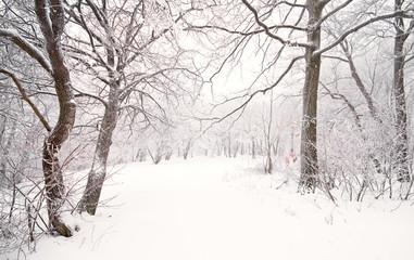 Nice winter photo