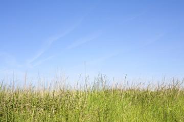 Gras unter blauem Sommerhimmel