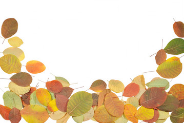 The autumnal leaves against white background