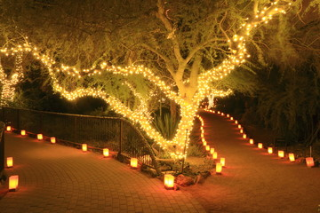 forked path illuminated by tree lights and luminarias