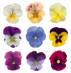 Poster Pansies collection of pansies