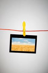 Wheat field on the photo