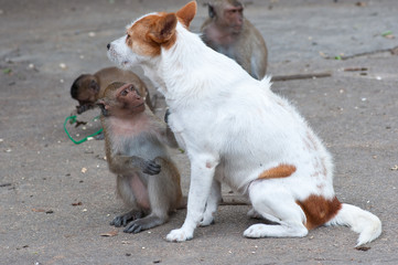 Monkeys checking for fleas and ticks in the dog