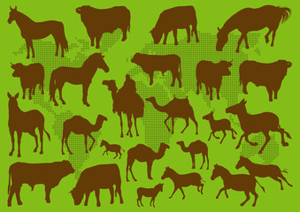 Domestic transport animals illustration collection background