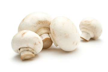 Champignon on a white background