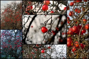 Collage Apfelbaum im Winter
