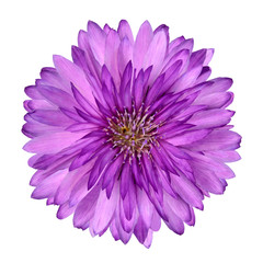 Purple Flower Stock Photos And Royalty Free Images Vectors And