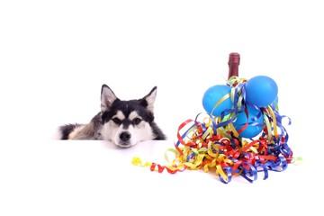 Hund Husky wünscht Happy New Year