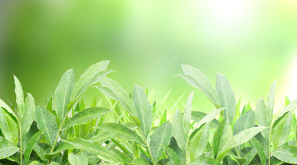 Green Nature plant with burred green background