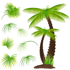 Palm Tree with Set of Leaves