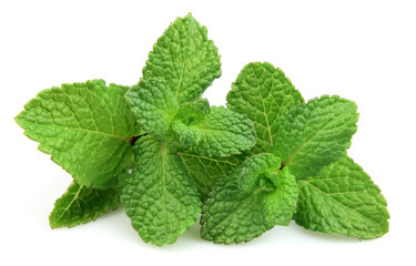 Two branches of fresh mint