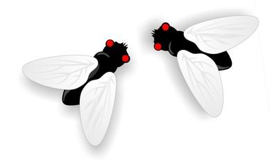 Fliegen2
