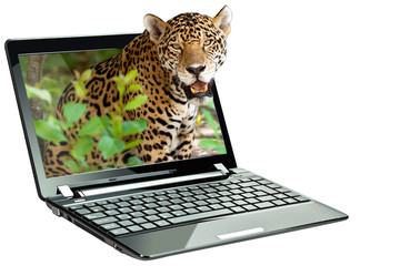 Black netbook with 3D jaguar on screen (my photo) over white