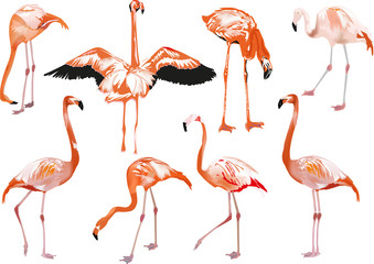 set of eight pink flamingo on white