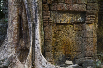 Angkor Thom overgrown wall