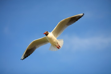 Gull against the clear blue sky