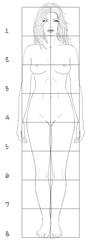 Female basic proportions