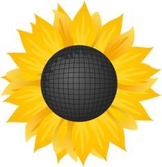 Vector illustration of a sunflower.