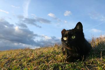 One eared cat