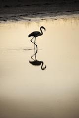 Flamingo at sunset on a lake
