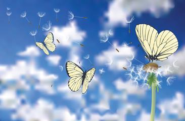 Zelfklevend Fotobehang Vlinders buttersky
