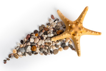 Decorative sea star isolated over white