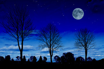 night with tree silhouettes and the moon