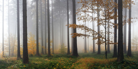 Papiers peints Foret brouillard Misty autumn forest after rain