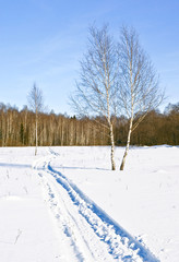 Fototapete - Snowmobile trace at the fringe of the forest