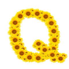 alphabet Q , sunflower isolated on white background