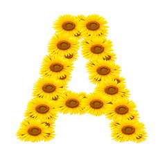 alphabet A , sunflower isolated on white background