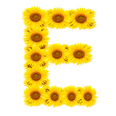 alphabet E, sunflower isolated on white background