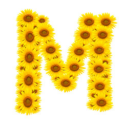 alphabet M , sunflower isolated on white background