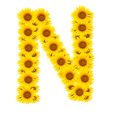 alphabet N , sunflower isolated on white background