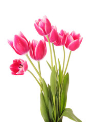 Fotobehang Tulp Red tulips on white background