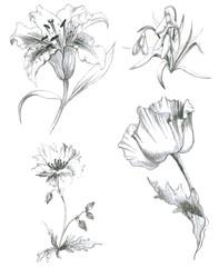 Illustration garden and wild flowers.Lilies,poppy.