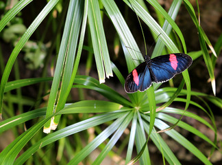 Butterfly on palm frond