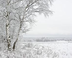 Fototapete - Russian landscape in the winter