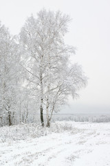Wall Mural - Russian landscape in the winter
