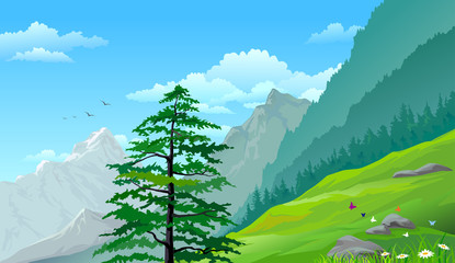 Hillside pine trees and distant mountains