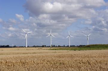Windräder und Kornfeld