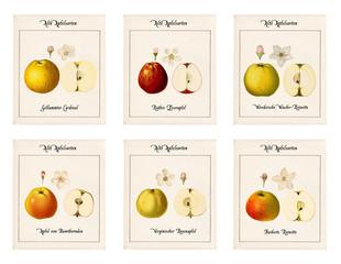 6 Tafeln alte Apfelsorten