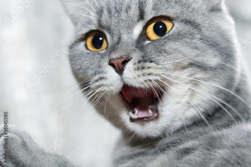 do neutered boy cats spray