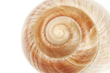 Muschelschale spiralförmig