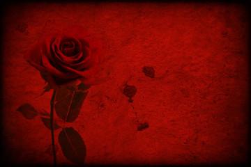 Texture rossa con rosa rossa