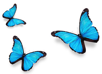 "Three blue butterfly ""morpho"", isolated on white"