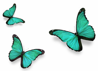 """Three green butterflies """"morpho"""", isolated on white"""