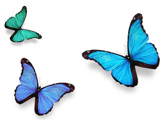 "Three butterflies ""morpho"", isolated on white"