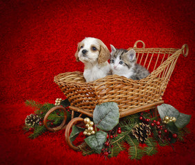 Christmas Puppy and Kitten.