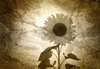 Altes Foto - Die Sonnenblume